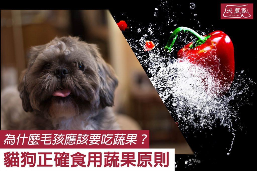 「貓狗究竟能不能吃蔬果?」這個問題一向沒有標準答案和共識;家長、獸醫與營養學家各自意見都不同,不少獸醫還堅決反對吃蔬果 — 到底該聽誰的?