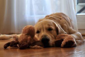 不讓毛孩吃寵物零食,是剝奪牠快樂的權利—犬豐家