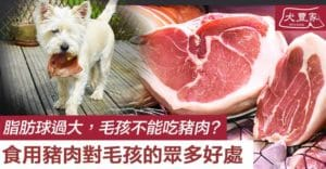 dogs and cats can eat pork