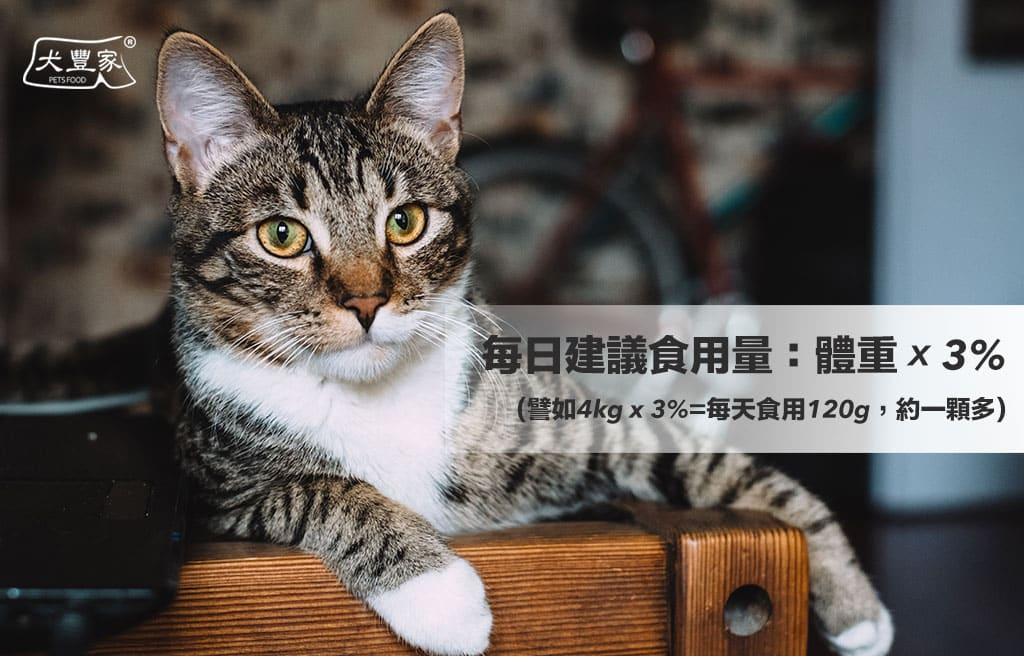 寵物鮮食元氣磚貓_04